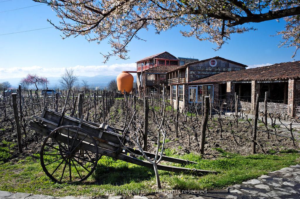 Twins winery, Georgia