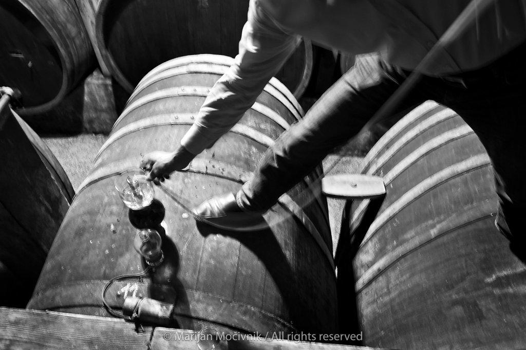 Vinakoper winery, Koper, Istra, Slovenia