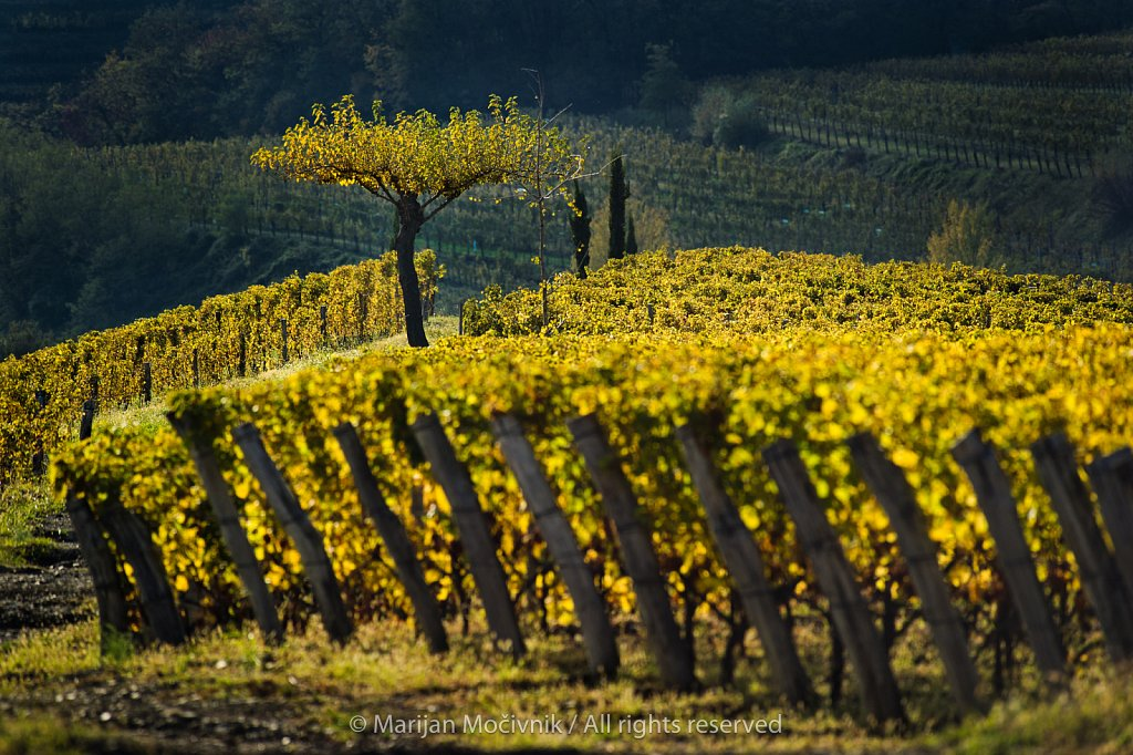 Gravner Winery, Oslavje (Oslavia), Collio, Italy