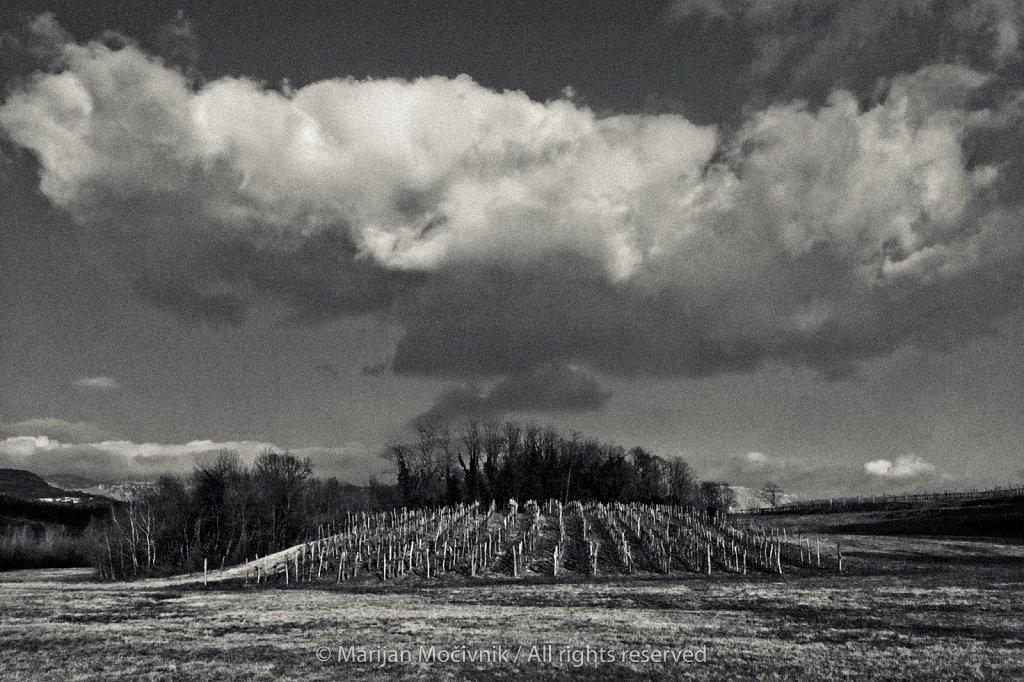 Vinograd-Dobravlje-7015-2.jpg