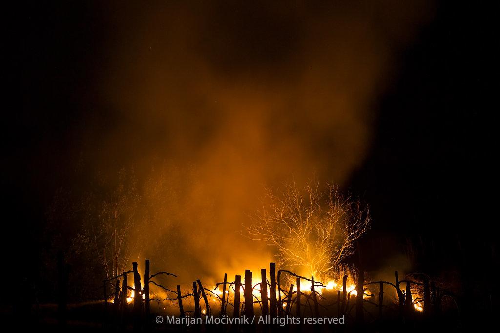 Dobravlje-trte-ogenj-Mikuz-poziganje-trave-3902.jpg