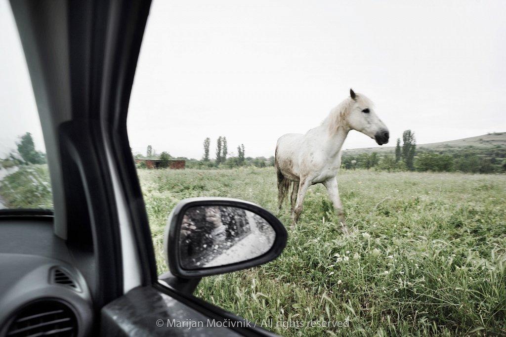 Makedonija-konj-6102-2.jpg