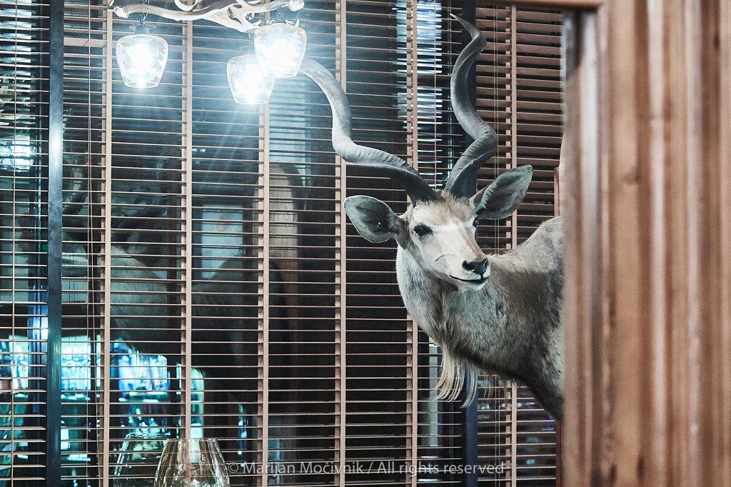 Skopje-Makedonija-Kamnik-Hunters-Lodge-Impala-0448-2048.jpg