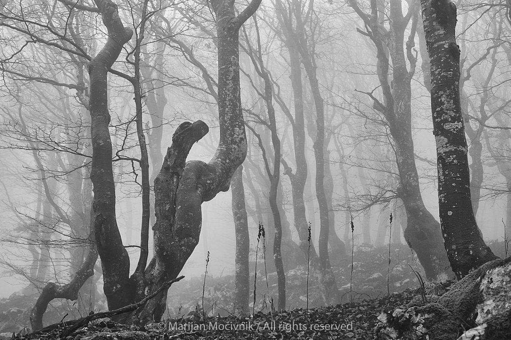 Gozd-jesen-megla-Caven-2488-2048.jpg