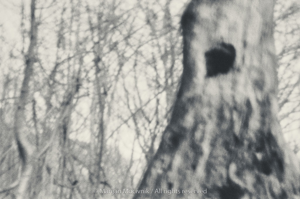 Film-2019-002-sken-021-suho-drevo-susica-2048.jpg