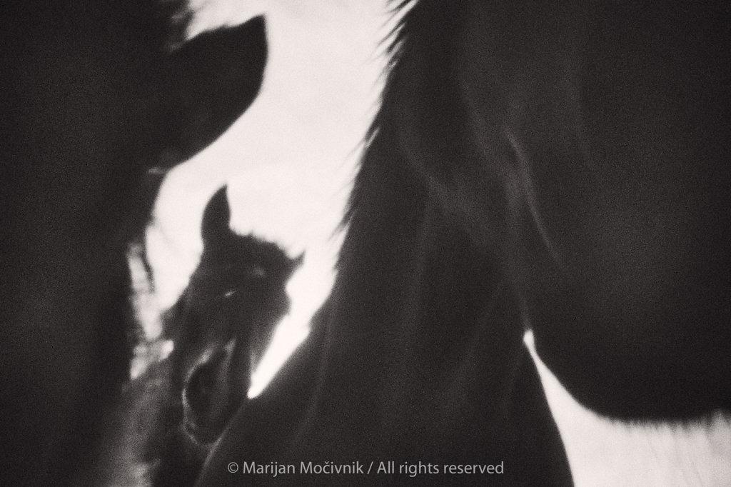 Konji-1373-1-2048.jpg