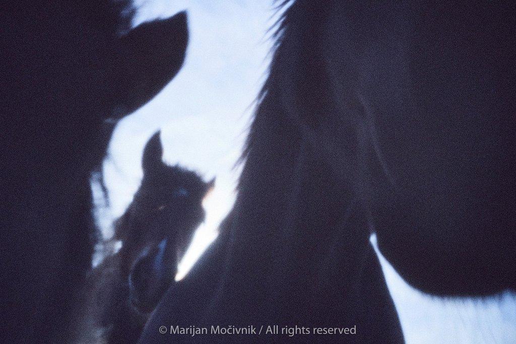Konji-1373-2048.jpg