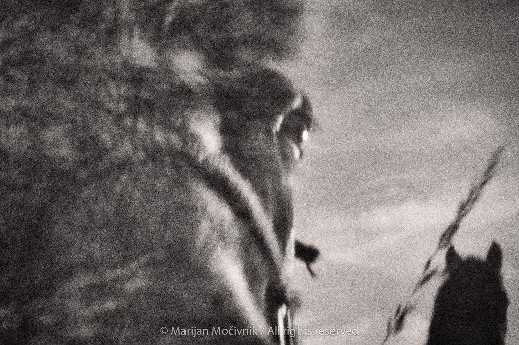 Konji-1303-2048.jpg