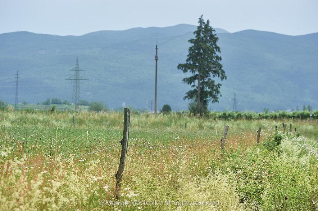 Vipavska-dolina-pod-Ustjem-5716-2048.jpg