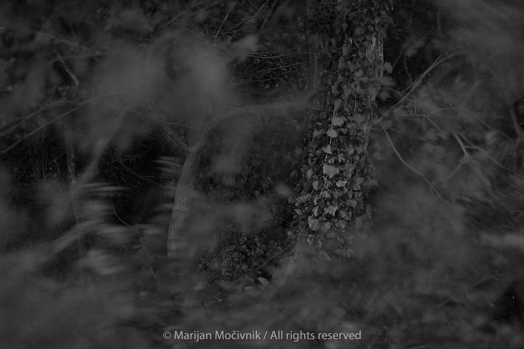 Dobravlje-gozd-7035-2048.jpg