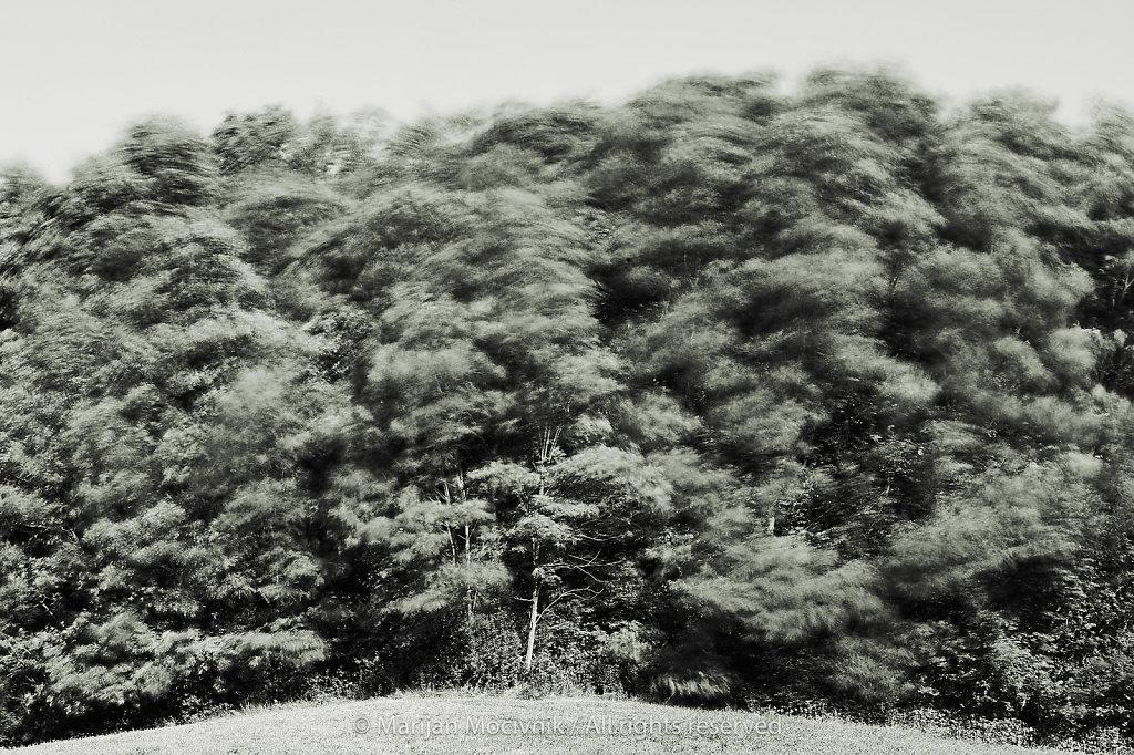Dobravlje-gozd-veter-9822-2048.jpg