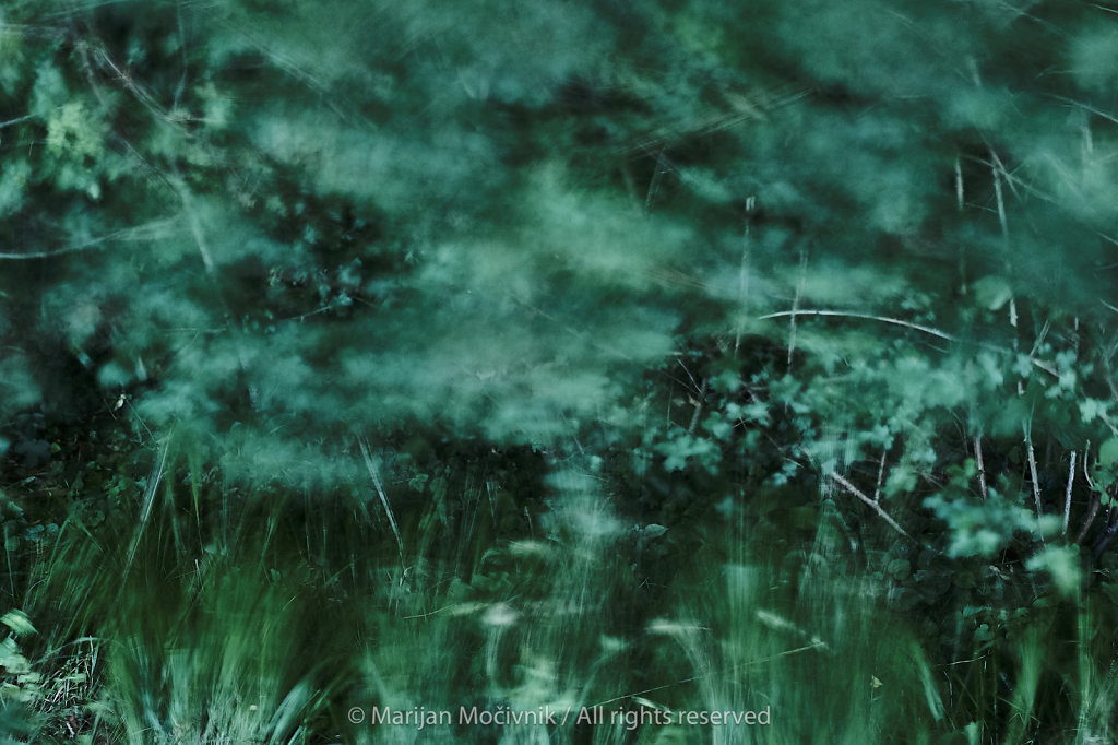 Gozd-trava-Dobravlje-veter-9951-1-2048.jpg