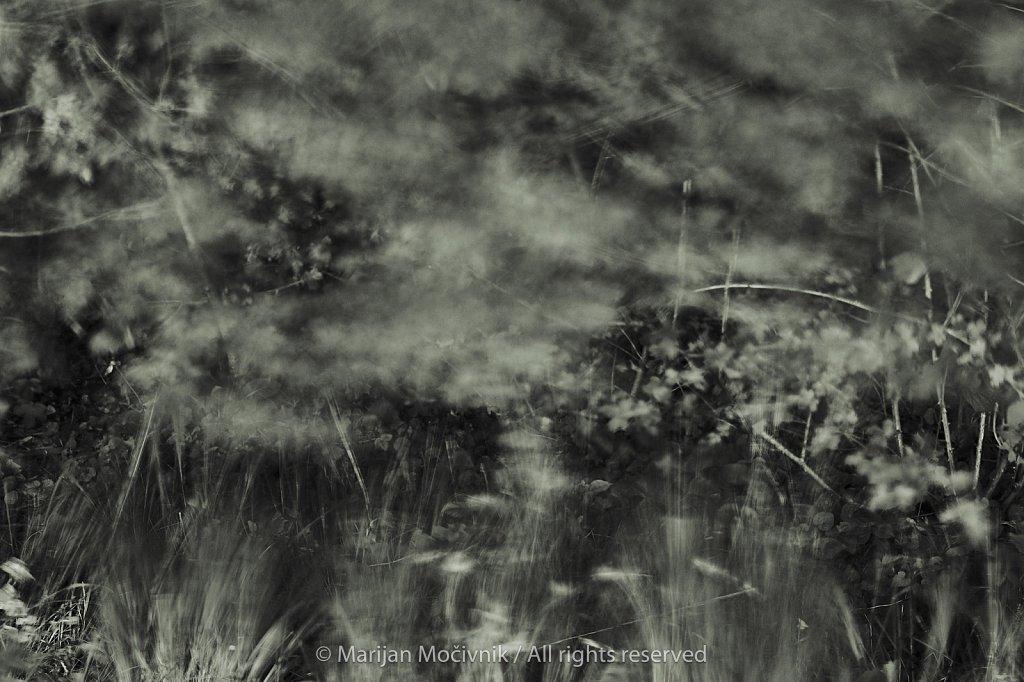 Gozd-trava-Dobravlje-veter-9951-2048.jpg