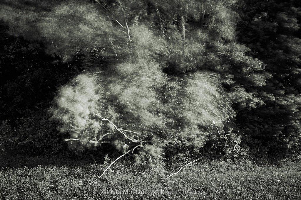 Gozdni-rob-Dobravlje-veter-0392-2048.jpg