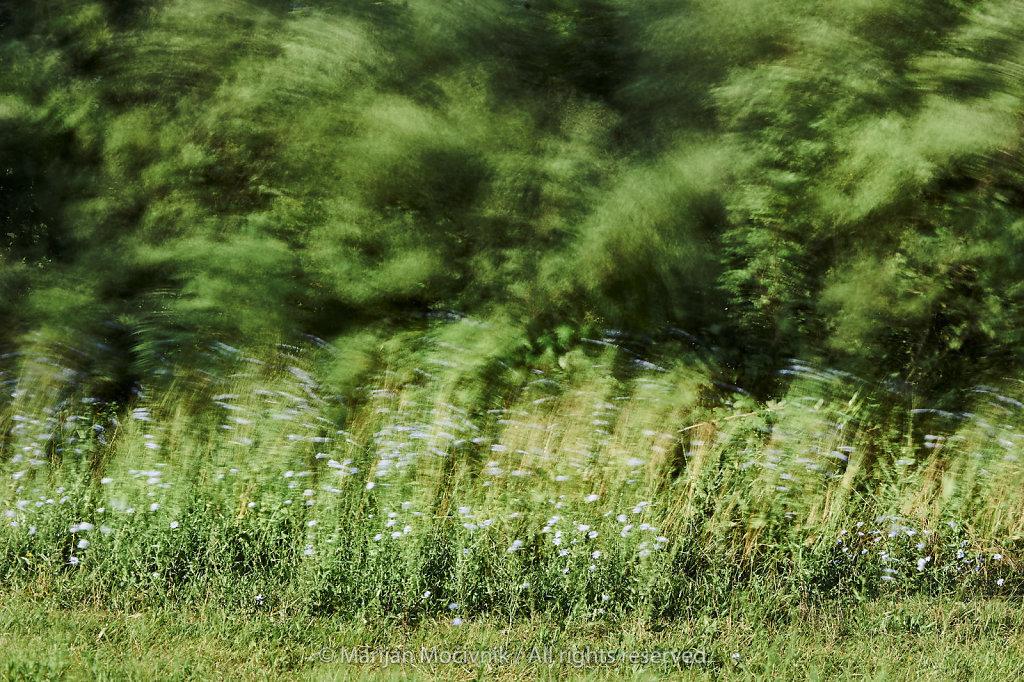 Dobravlje-cvetje-grmovje-omejek-veter-0798-2048.jpg