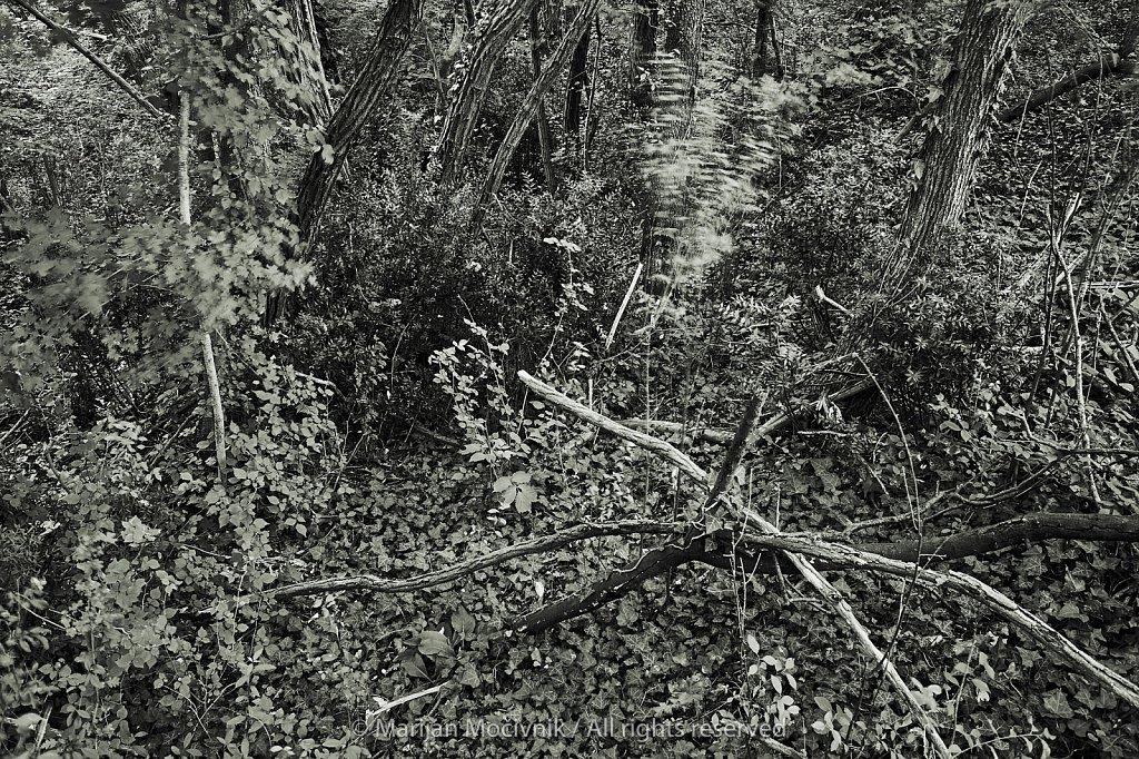Gozd-Dobravlje-1286-2048.jpg