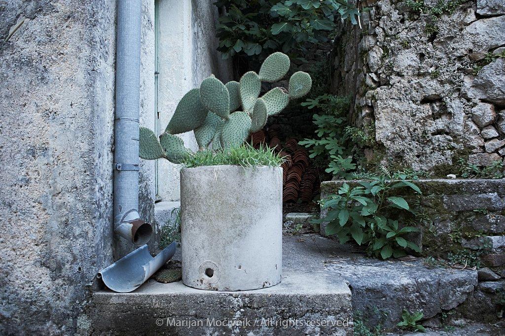 Kaktus-Beli-3264-2048.jpg