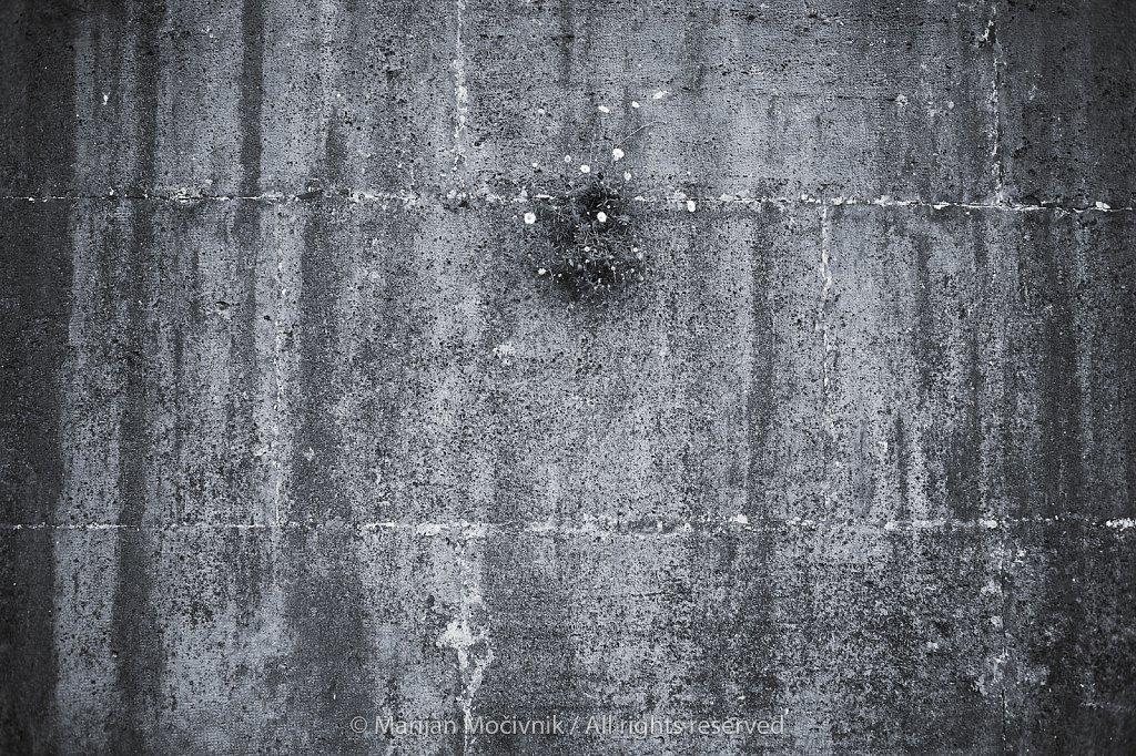 Rastlina-v-zidu-Rim-ob-Tiberi-7483-2048.jpg