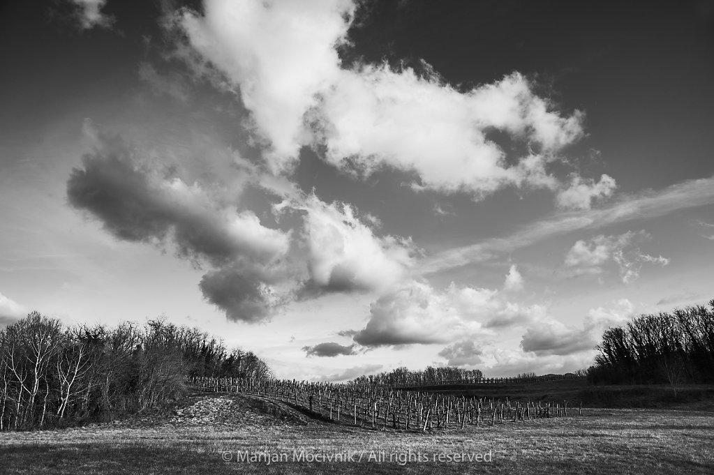 Vinograd-pejsaz-Dobravlje-0995-2048.jpg
