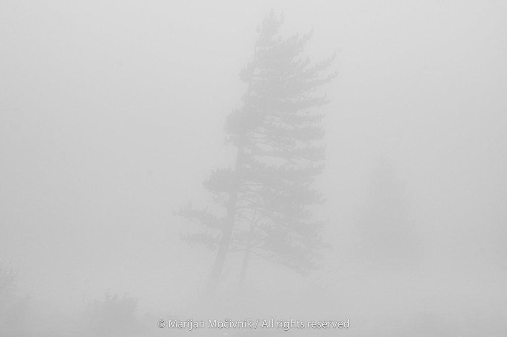 Drevo-silhueta-megla-Otlica-2118-1-2048.jpg