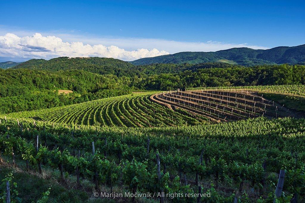 Vinogradi-nad-vasjo-Zalosce-5057-2048.jpg