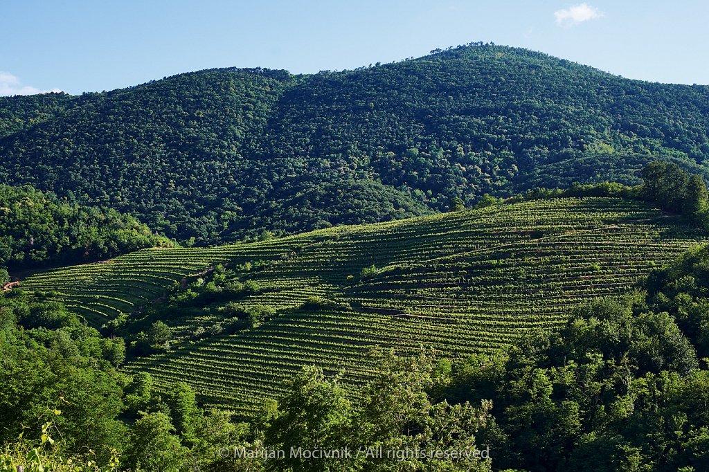 Kamnovec-4842-2048.jpg