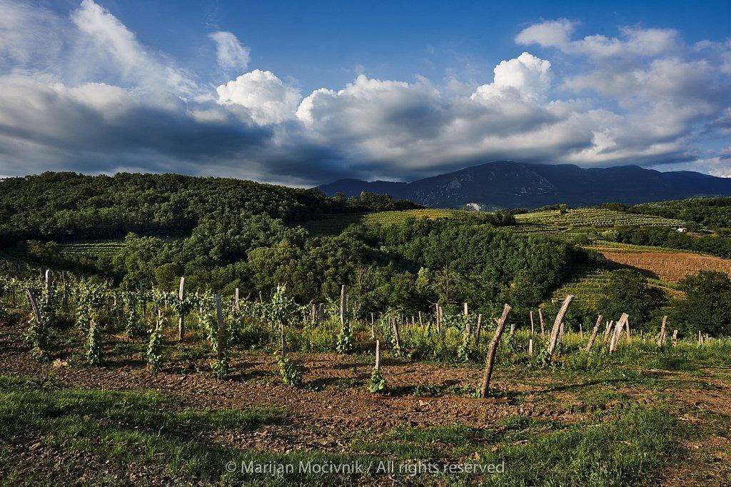 Mlad-vinograd-Caven-oblaki-5574-2048.jpg