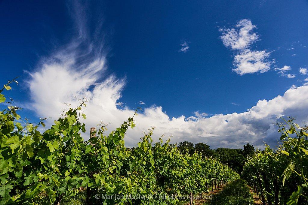 Trte-oblaki-Dobravlje-6721.jpg