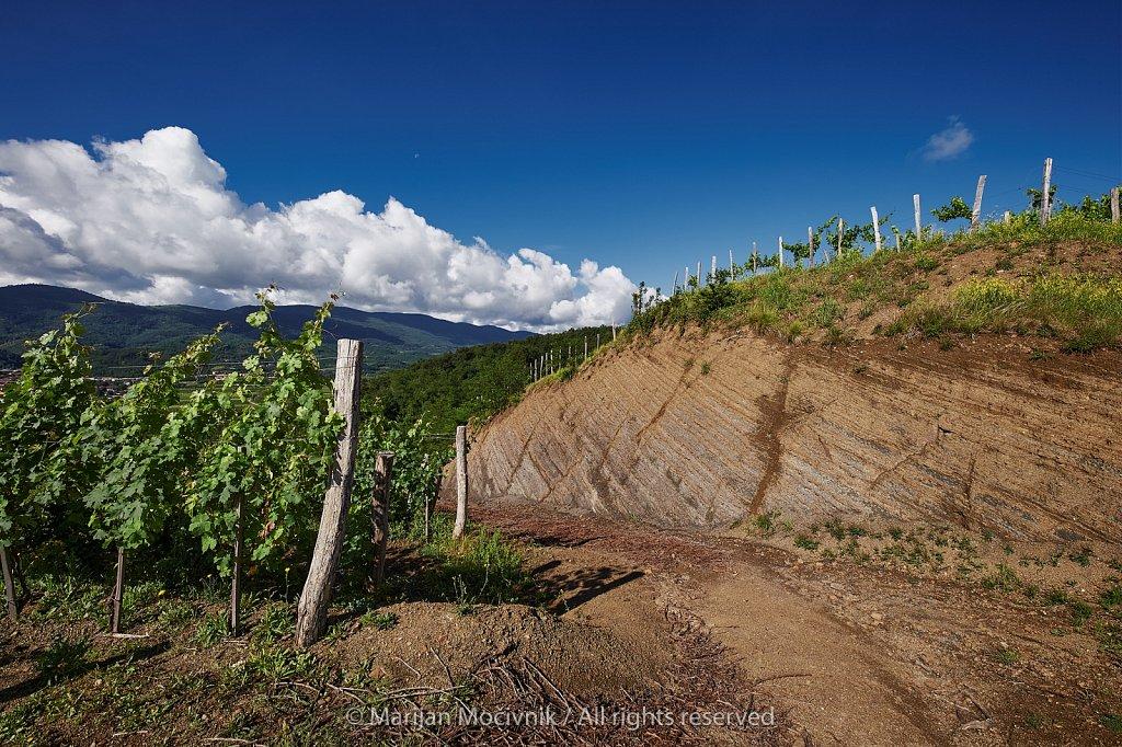 Vinograd-ob-useku-prerez-7480-2048.jpg