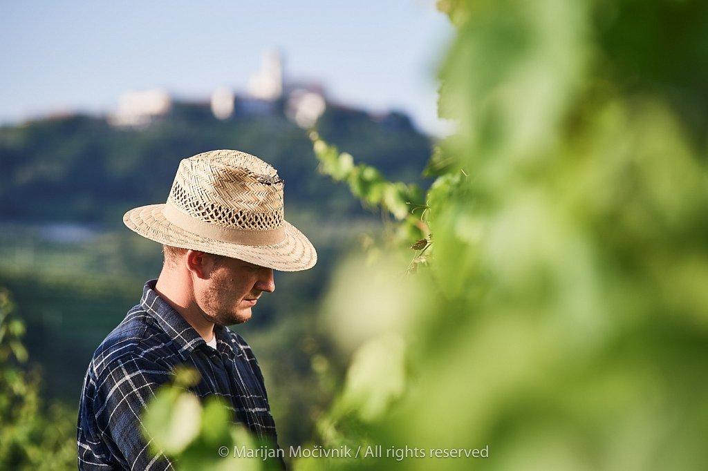 Jure-Simcic-vinograd-Kozana-9050-2048.jpg